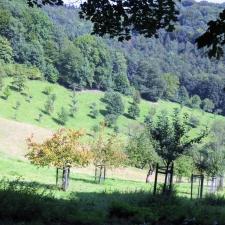 Rheinsteig Stage 2 - Orchard meadows in front of the Löwenburg