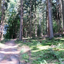 Rheinsteig Stage 2 - Further through the woods - here it goes uphill again