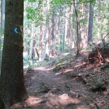 Rheinsteig Stage 2 - Hike through the forest, shortly before Bad Honnef