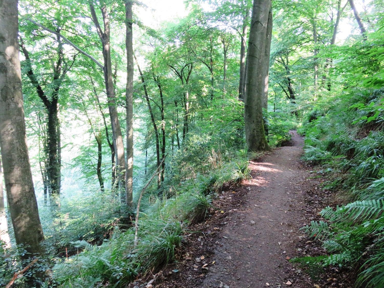 Rheinsteig Stage 2 -On the way to the Löwenburg