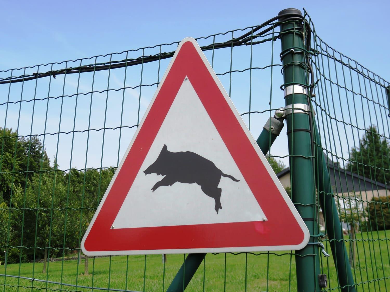 Rheinsteig Stage 3 - Attention wild boars
