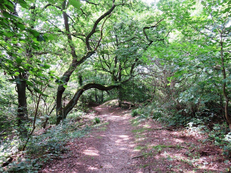 Rheinsteig Stage 3 - Forest path on the Rheinsteig
