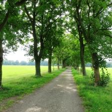 Rheinsteig Stage 3 - The avenue behind the Haanhof estate