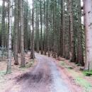 Rheinsteig Stage 3 - Path through coniferous forest