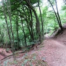 Rheinsteig Stage 4 -Forest trail to Hammerstein