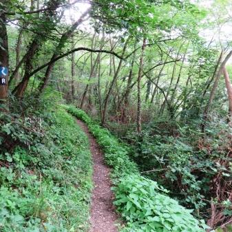 Rheinsteig Stage 4 - Forest path on the Rheinsteig