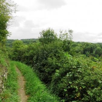 Rheinsteig Stage 4 - Path on the Rheinsteig