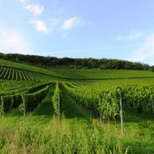 Rheinsteig Stage 4 - Wine fields in front of Leutesdorf