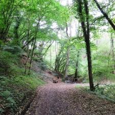 Rheinsteig Stage 5 - Forest trail before Altwied