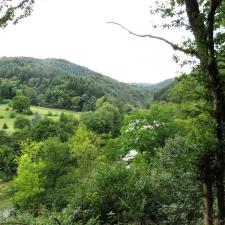 Rheinsteig Stage 5 - Forest path along the Wied