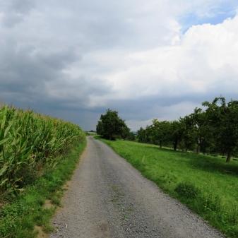 Rheinsteig Stage 5 - field path on the Rheinsteig