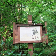 Rheinsteig Stage 6 - Educational trail in the forest with an information board on the ash tree