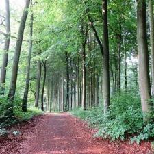 Rheinsteig Stage 6 - Forest path to Sayn