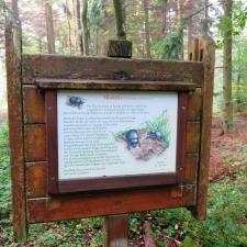 Rheinsteig Stage 6 - Dung Beetle Information Board
