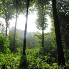 Rheinsteig Stage 6 - Mystical atmosphere in the forest