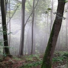 Rheinsteig Stage 6 - Foggy forest behind Rengsdorf