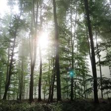 Rheinsteig Stage 6 - Mystical atmosphere in the forest behind Rengsdorf