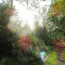 Rheinsteig Stage 6 - Forest trail behind Rengsdorf