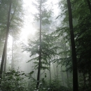 Rheinsteig Stage 6 - Morning mood in the forest with fog