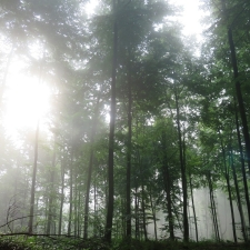 Rheinsteig Stage 6 - Sunbeams try to penetrate the fog in the forest