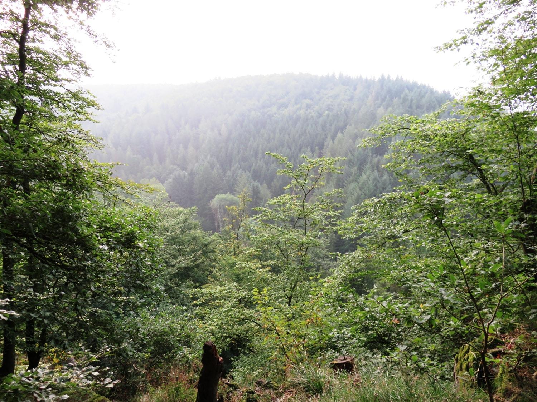 Rheinsteig Stage 6 - Nonnenlay Viewpoint