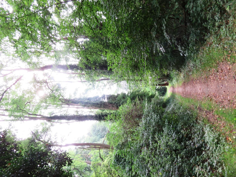 Rheinsteig Stage 6 - Forest path before Sayn