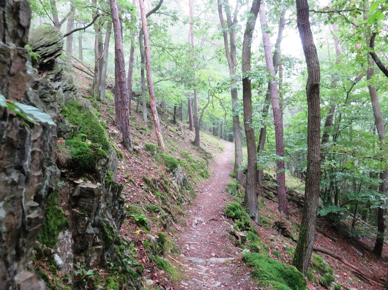 Rheinsteig Stage 7 -  Forest Trail - The weather is getting better