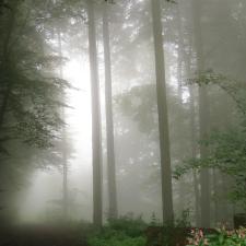 Rheinsteig Stage 7 - Mystic cloud forest behind Sayn