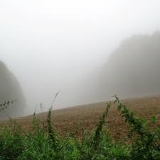 Rheinsteig Stage 7 - Fog over a field behind Sayn