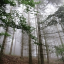 Rheinsteig Stage 7 - foggy atmosphere in the forest in the morning