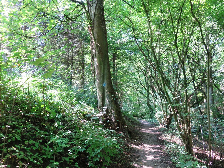 Rheinsteig Stage 7 -  Forest trail behind Vallendar