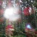 Rheinsteig-Day-8_sunbeams-through-the-treetops