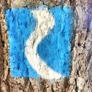 Rheinsteig Stage 1 - The Rheinsteig symbol on a tree trunk.
