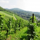 Rheinsteig Stage 1 - Grapevines as far as the eye can see and a beautiful view to Petersberg and the Drachenfels (Dragonstone).