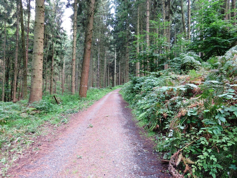Rheinsteig Stage 1 - Path to the Guillaume hut through the Siebengebirge
